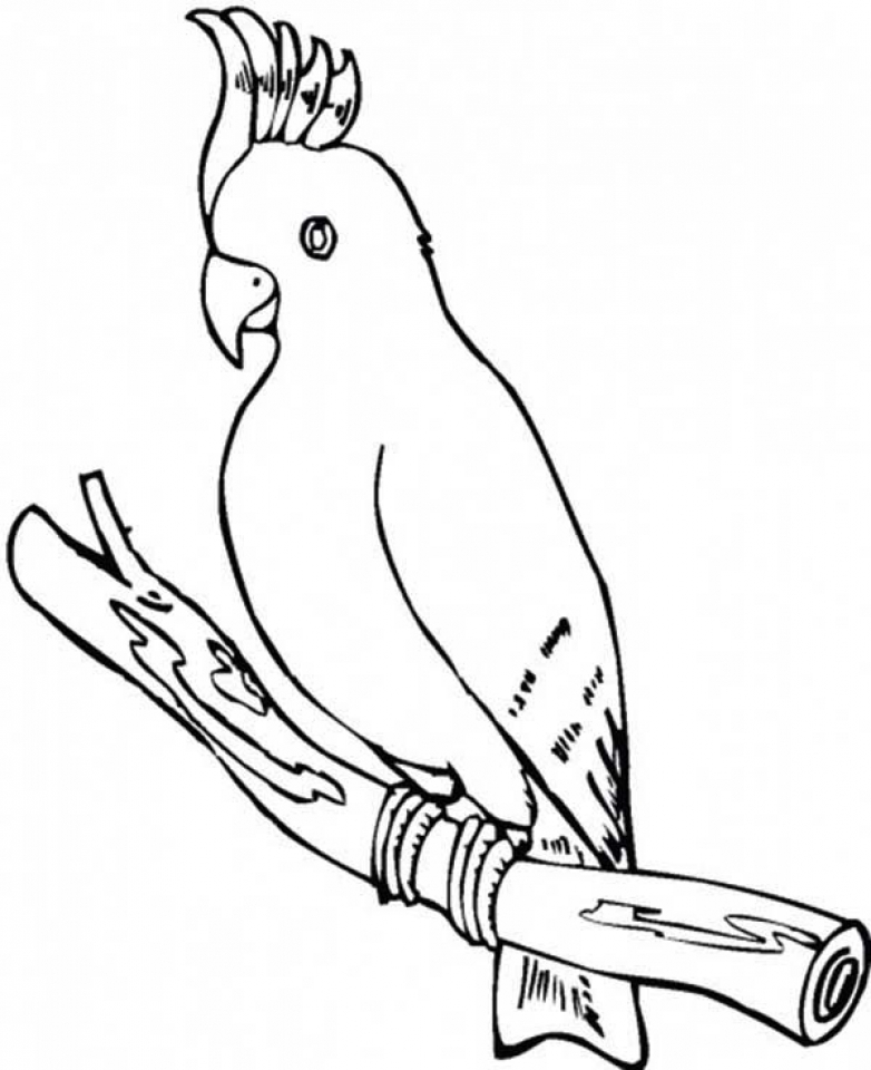 parrot to color get this parrot coloring pages free printable 75185 color to parrot