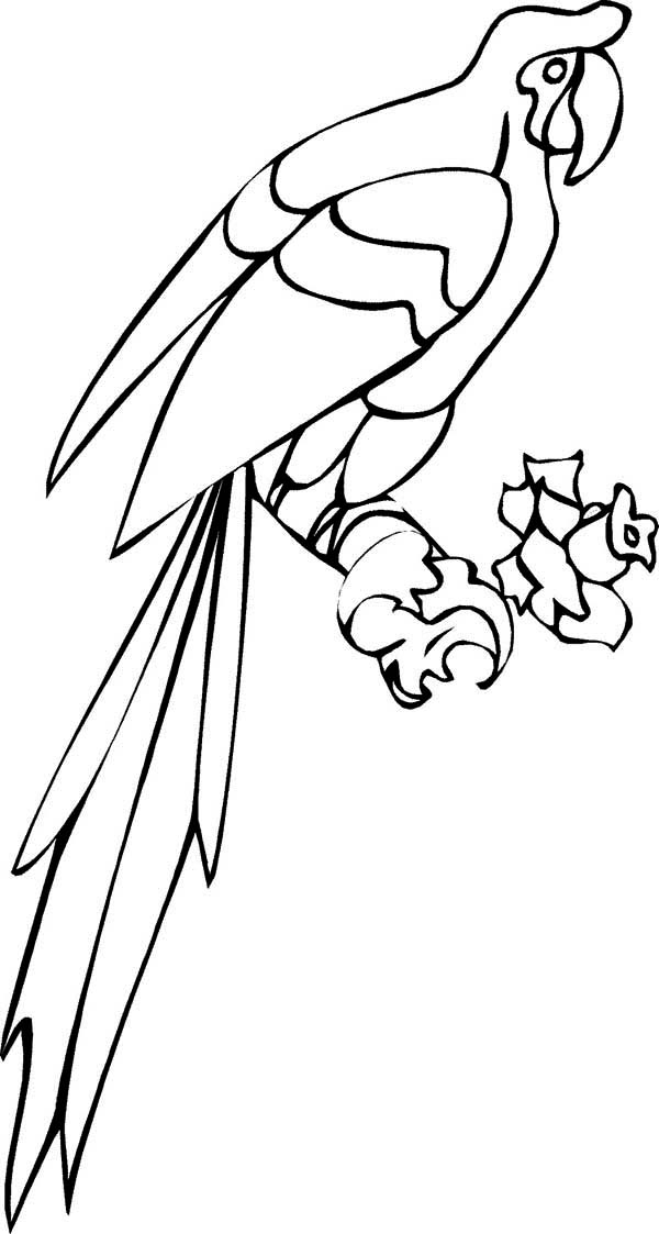 parrot to color long tail parrot coloring page download print online parrot to color