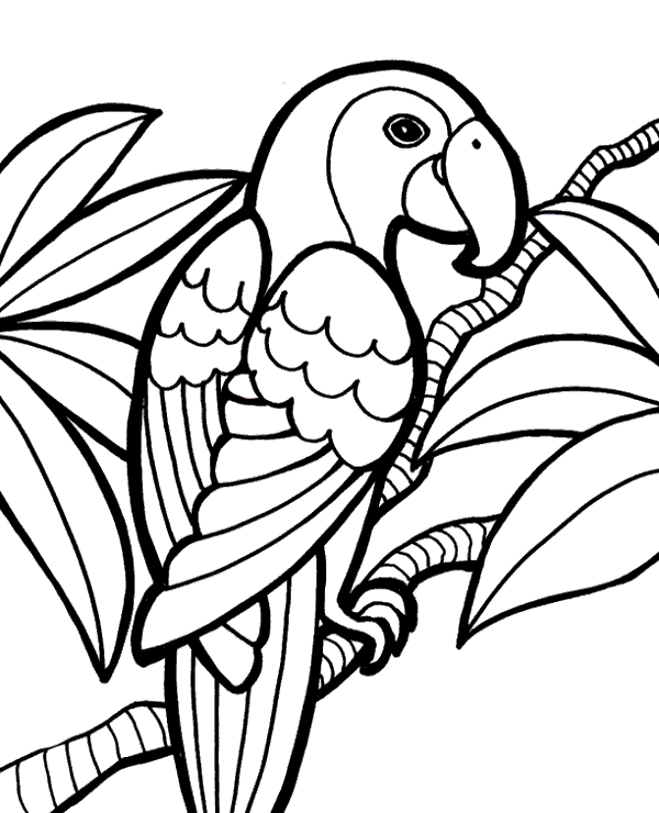 parrot to color lovely parrot coloring page download print online color parrot to