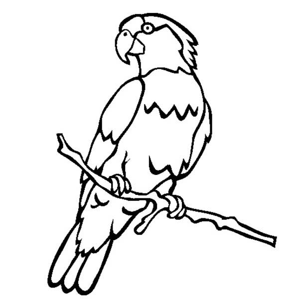 parrot to color male parrot coloring page download print online parrot to color