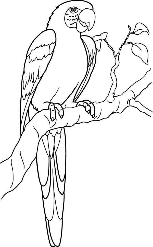 parrot to color printable parrot coloring pages for kids color parrot to