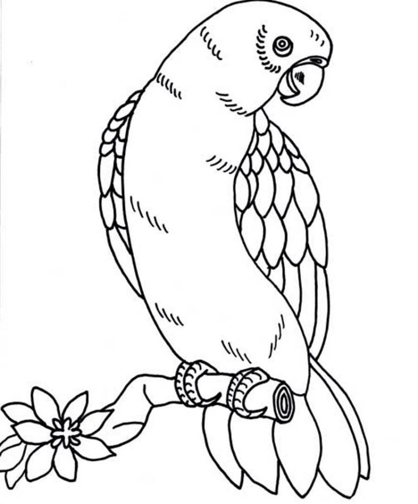 parrot to color printable parrot coloring pages for kids color to parrot