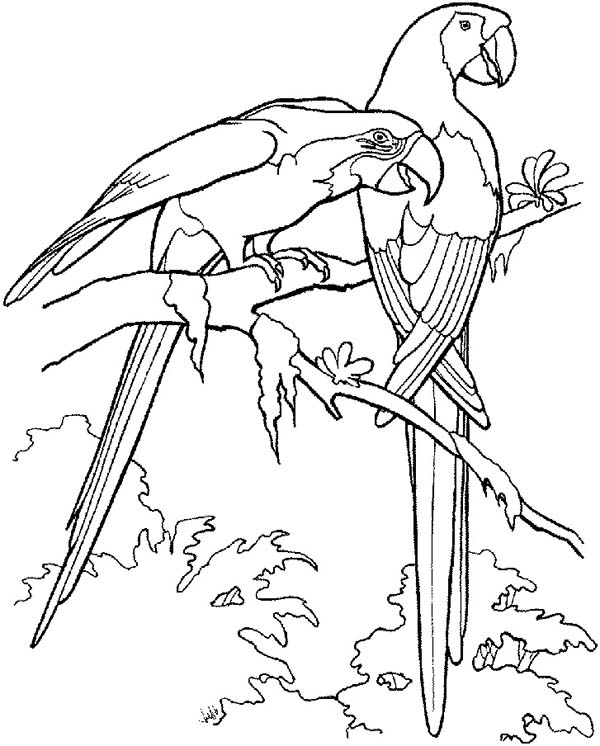 parrot to color printable parrot coloring pages for kids parrot to color