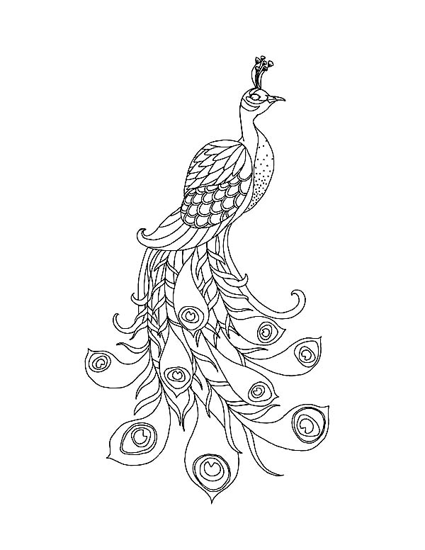 peacock color page a beautiful peacock with his long train coloring page color page peacock