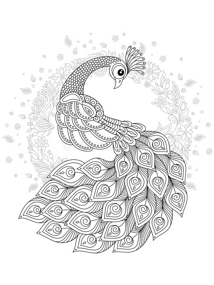 peacock color page free peacock coloring pages for adults printable to peacock color page