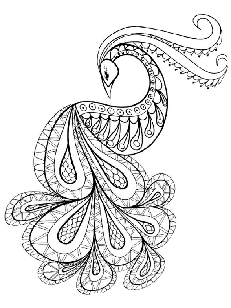 peacock color page free peacock coloring pages for adults printable to peacock page color