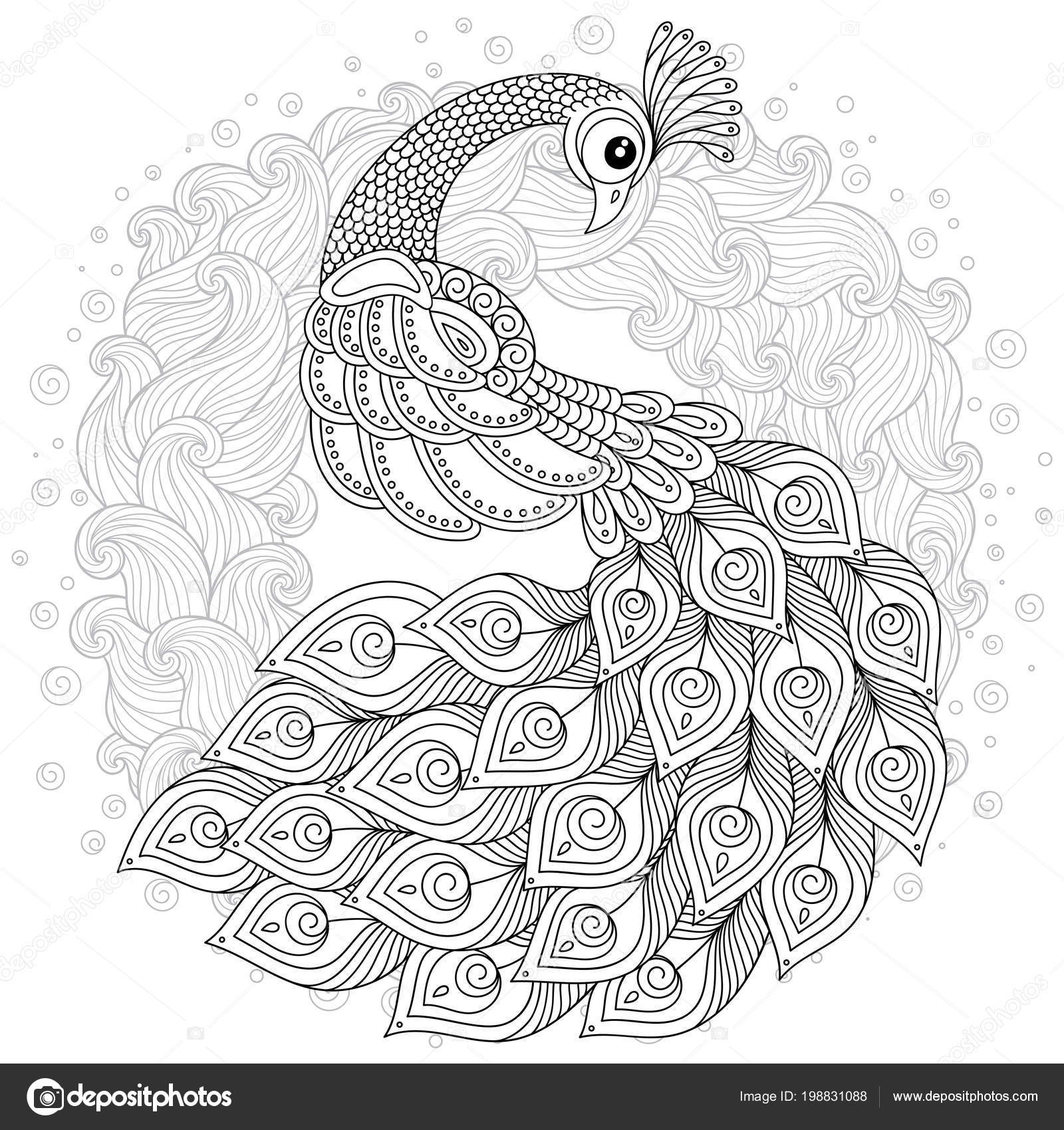 peacock color page hand drawn peacock stress coloring page high details peacock color page