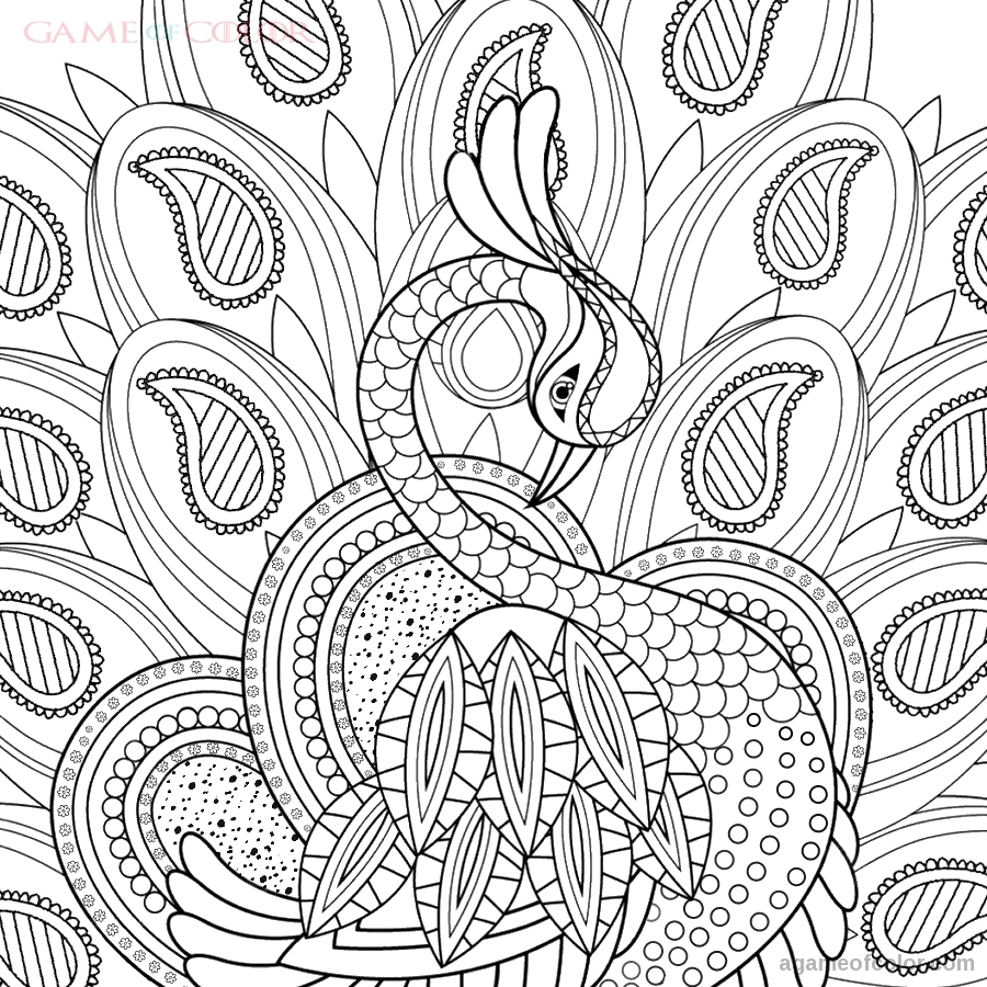 peacock color page peacock coloring kids coloring kids color page peacock