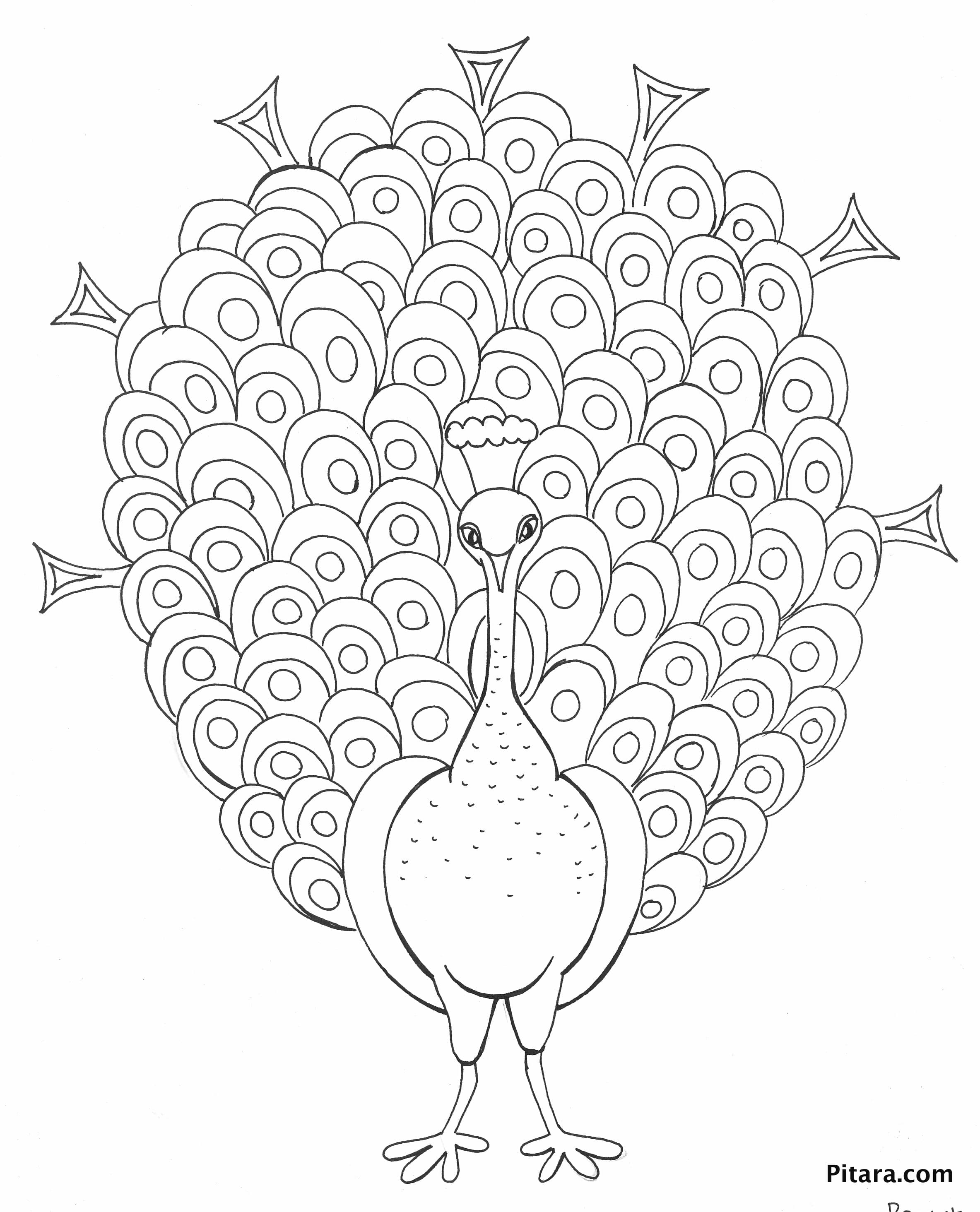 peacock color page peacock coloring page pitara kids network color page peacock
