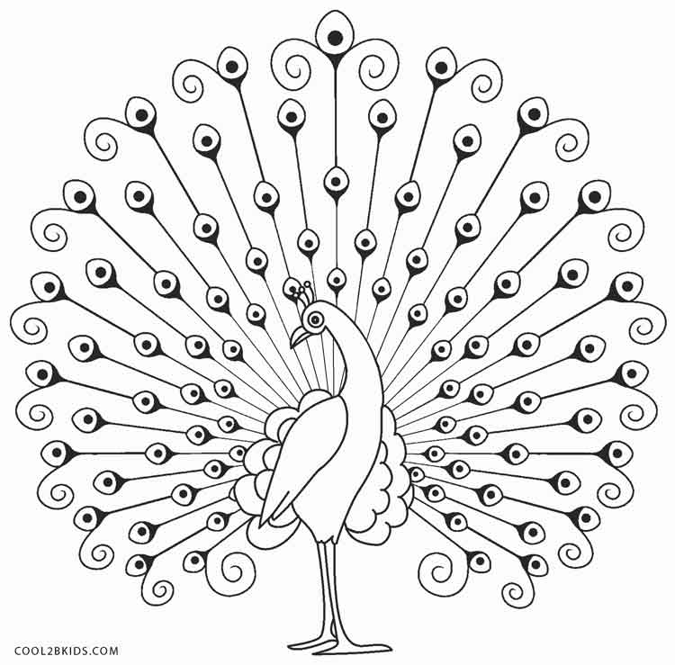 peacock color page peacock coloring pages color peacock page