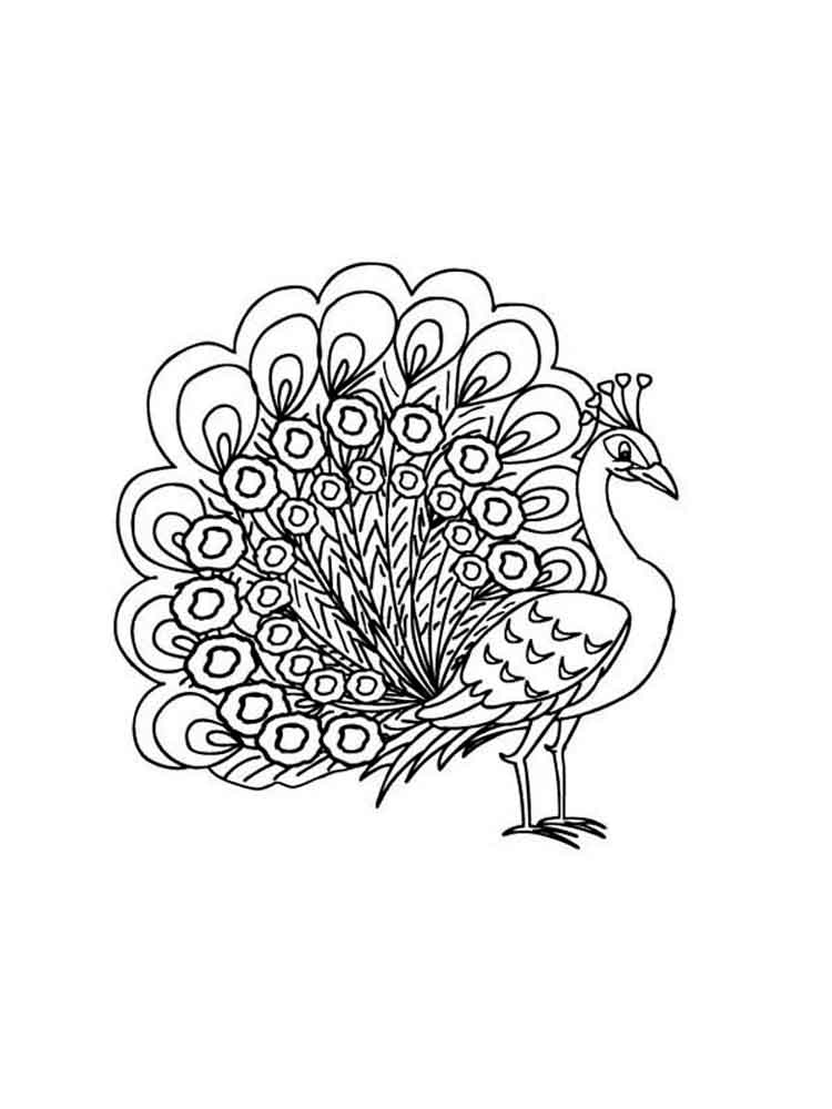 peacock color page peacock coloring pages download and print peacock color peacock page