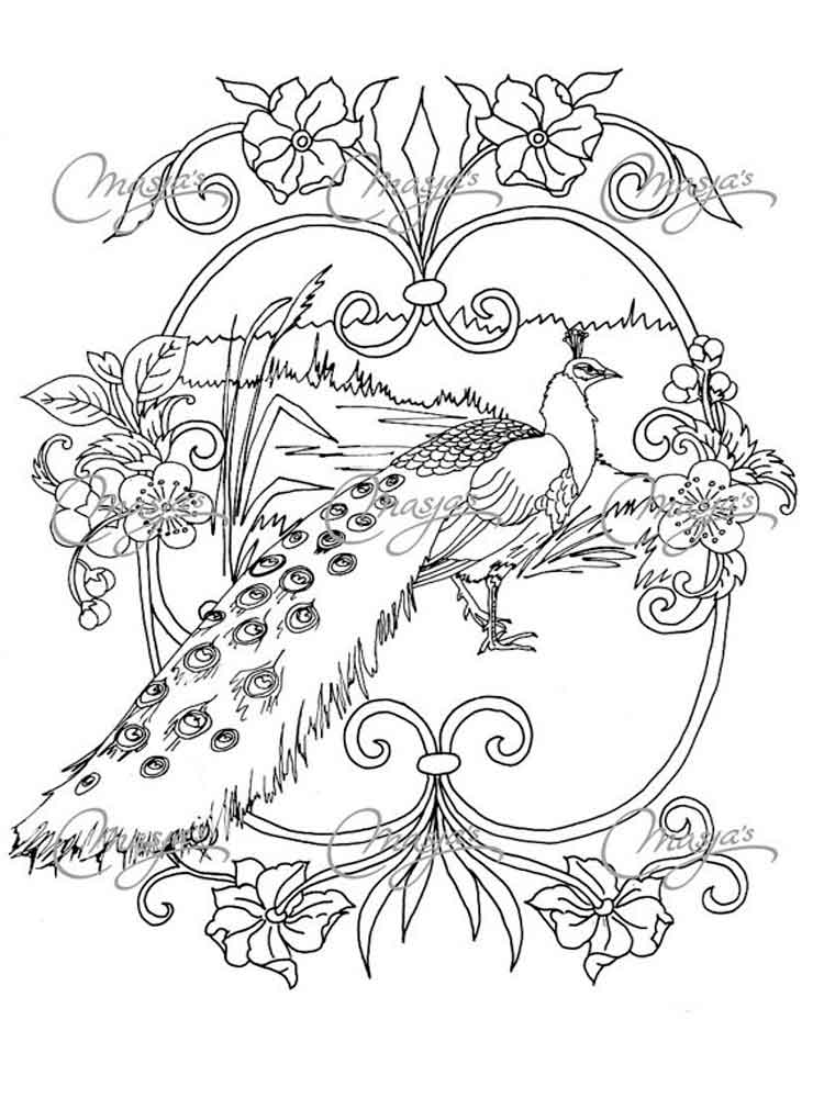 peacock color page peacock coloring pages download and print peacock page peacock color