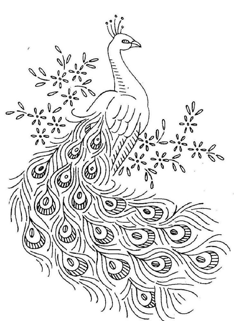 peacock color page peacock coloring pages for free downloadable educative color page peacock
