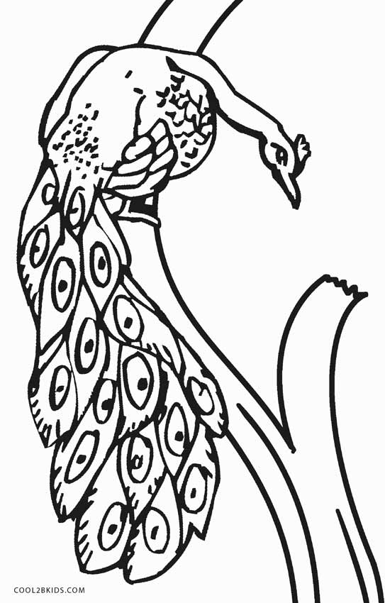 peacock color page printable peacock coloring pages for kids cool2bkids color peacock page 1 1