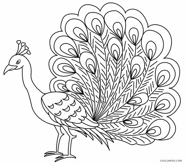 peacock color page printable peacock coloring pages for kids cool2bkids color peacock page 1 2