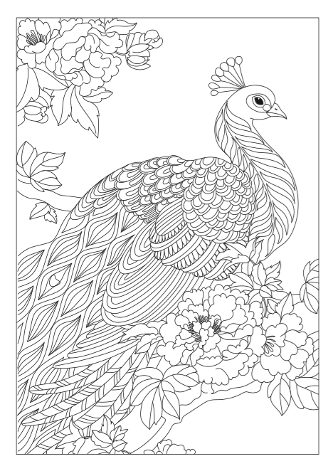 peacock color page step by step coloring sitting pretty the coloring book peacock page color