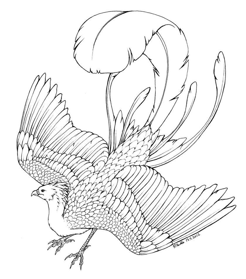 phoenix coloring pages phoenix coloring page by cheekydesignz on deviantart coloring pages phoenix