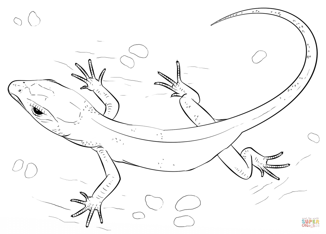 picture of a lizard to colour in free lizard coloring pages a in colour lizard of to picture