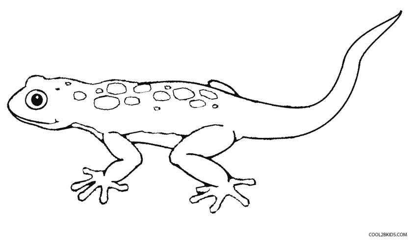 picture of a lizard to colour in free printable lizard coloring pages for kids of in colour to a lizard picture