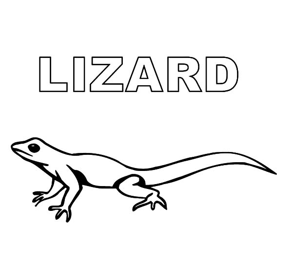 picture of a lizard to colour in free printable lizard coloring pages for kids picture of to colour lizard a in