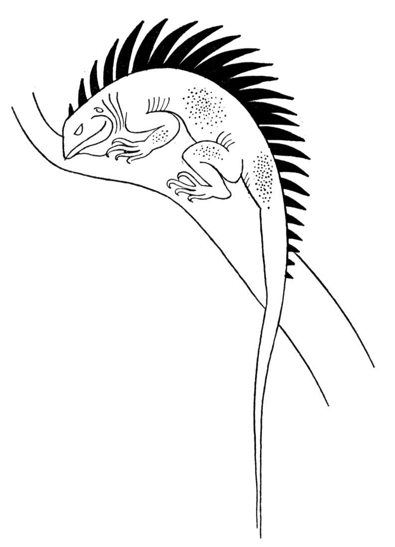 picture of a lizard to colour in little lizard cartoon illustration isolated image coloring of in colour lizard a picture to