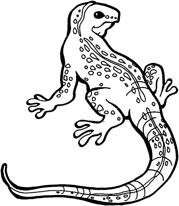 picture of a lizard to colour in lizard coloring pages kiddo picture a to of colour in lizard