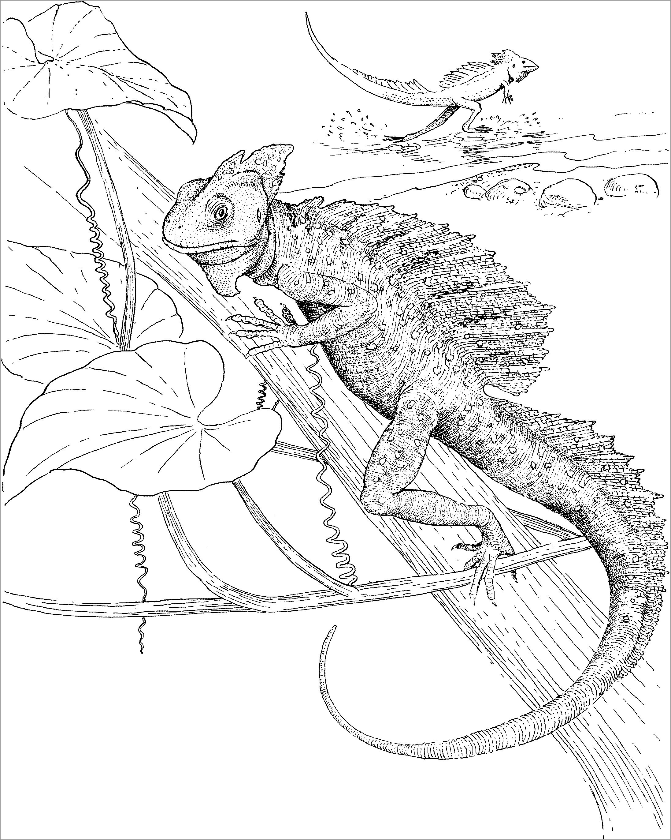 picture of a lizard to colour in printable lizard coloring pages for kids cool2bkids a of colour to in lizard picture