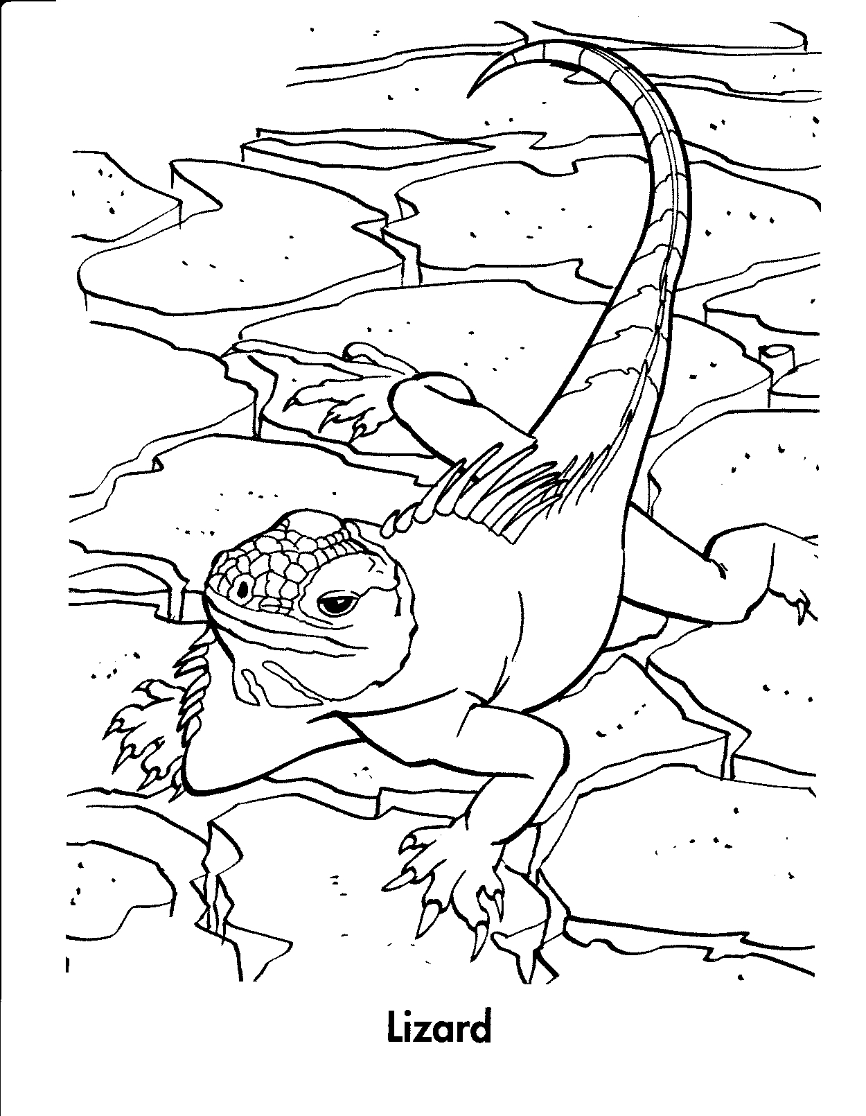 picture of a lizard to colour in reptile coloring pages to download and print for free lizard picture in colour to of a