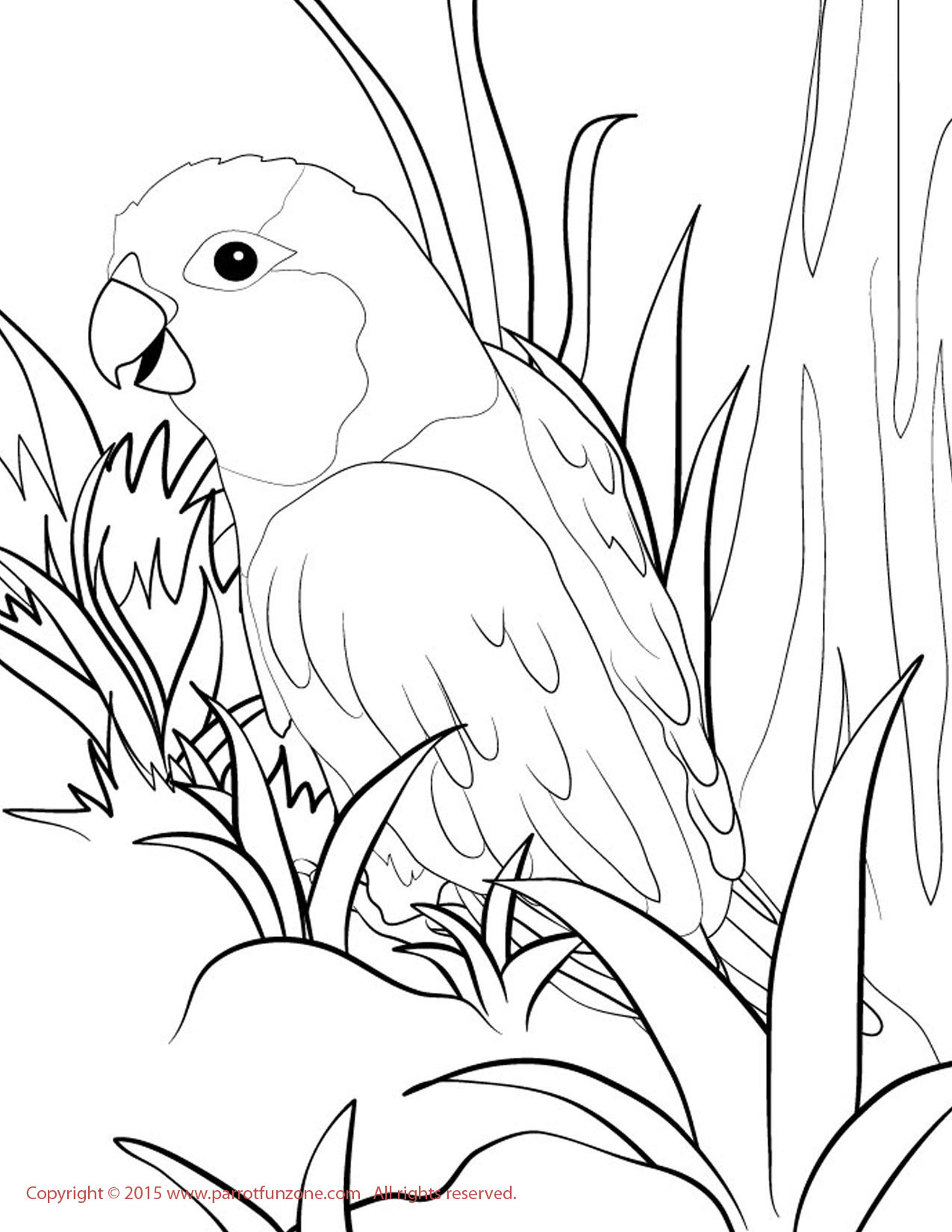 picture of parrot for colouring free printable parrot coloring pages for kids for picture parrot of colouring
