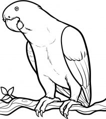 picture of parrot for colouring parrot on branch coloring page parrot on branch coloring picture colouring parrot for of