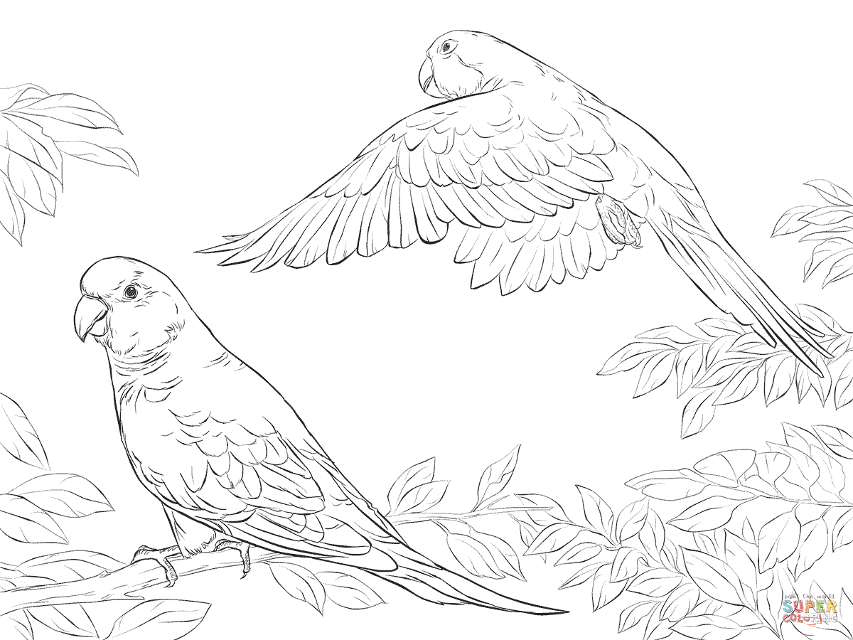 picture of parrot for colouring pets coloring pages best coloring pages for kids colouring picture for parrot of