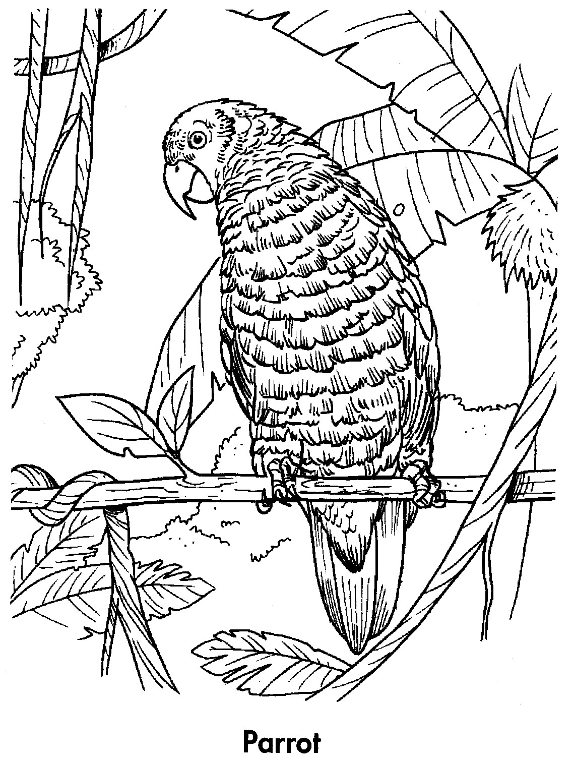 picture of parrot for colouring tropical bird coloring pages at getcoloringscom free parrot colouring of for picture