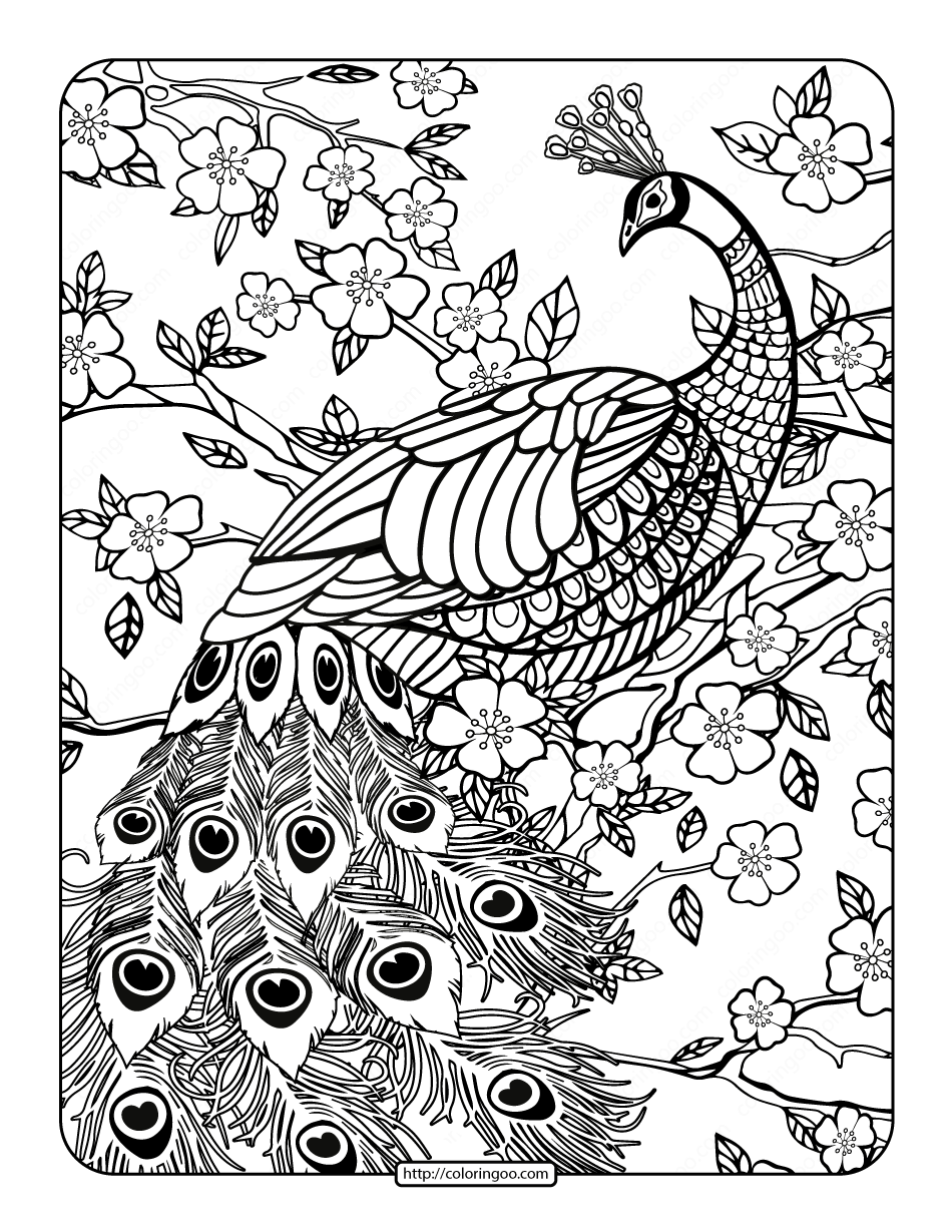 picture of peacock to color free peacock coloring sheet peacock coloring pages color of peacock picture to