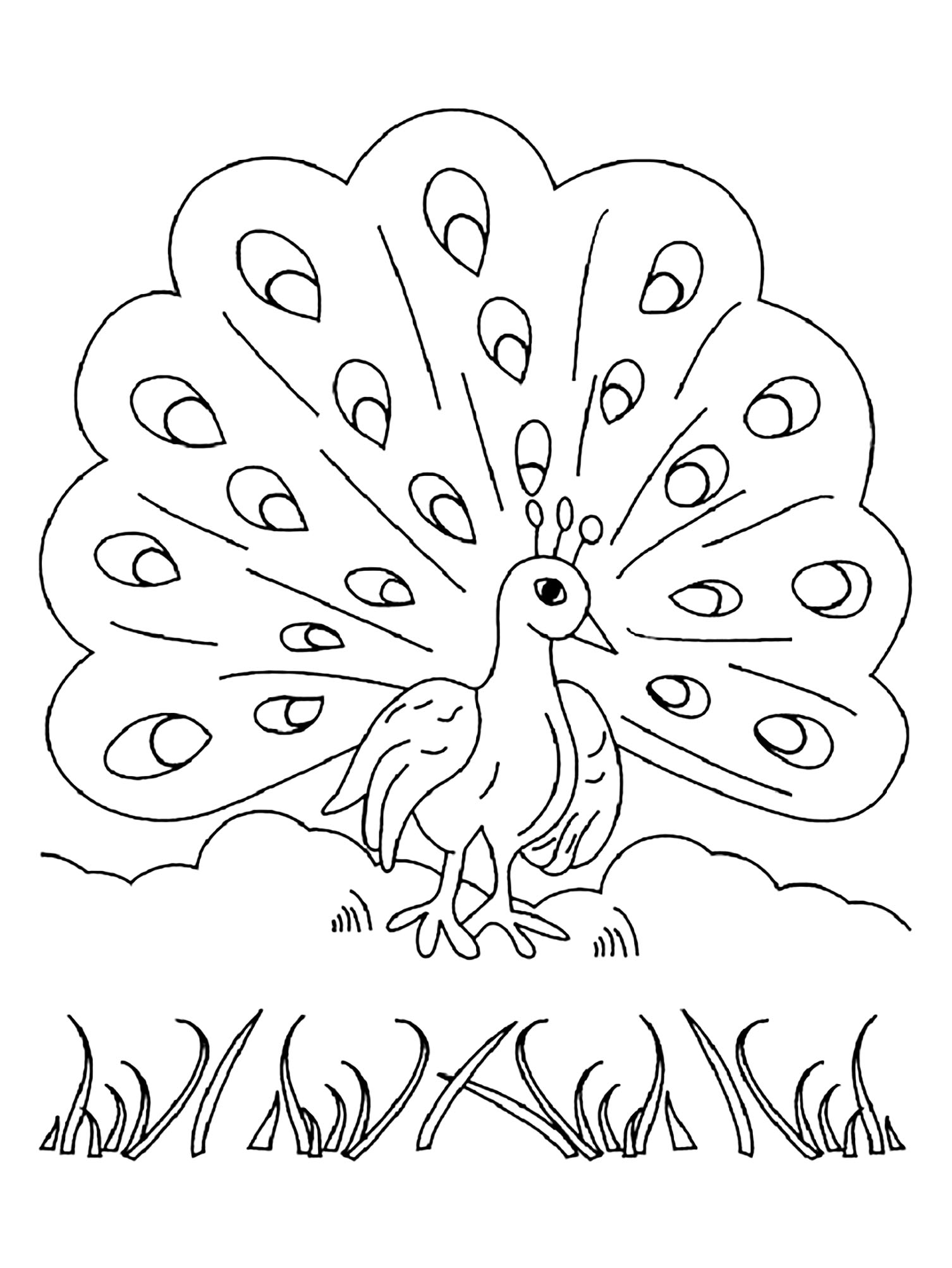 picture of peacock to color how to draw a peacock by dawn peacock coloring pages peacock picture color to of