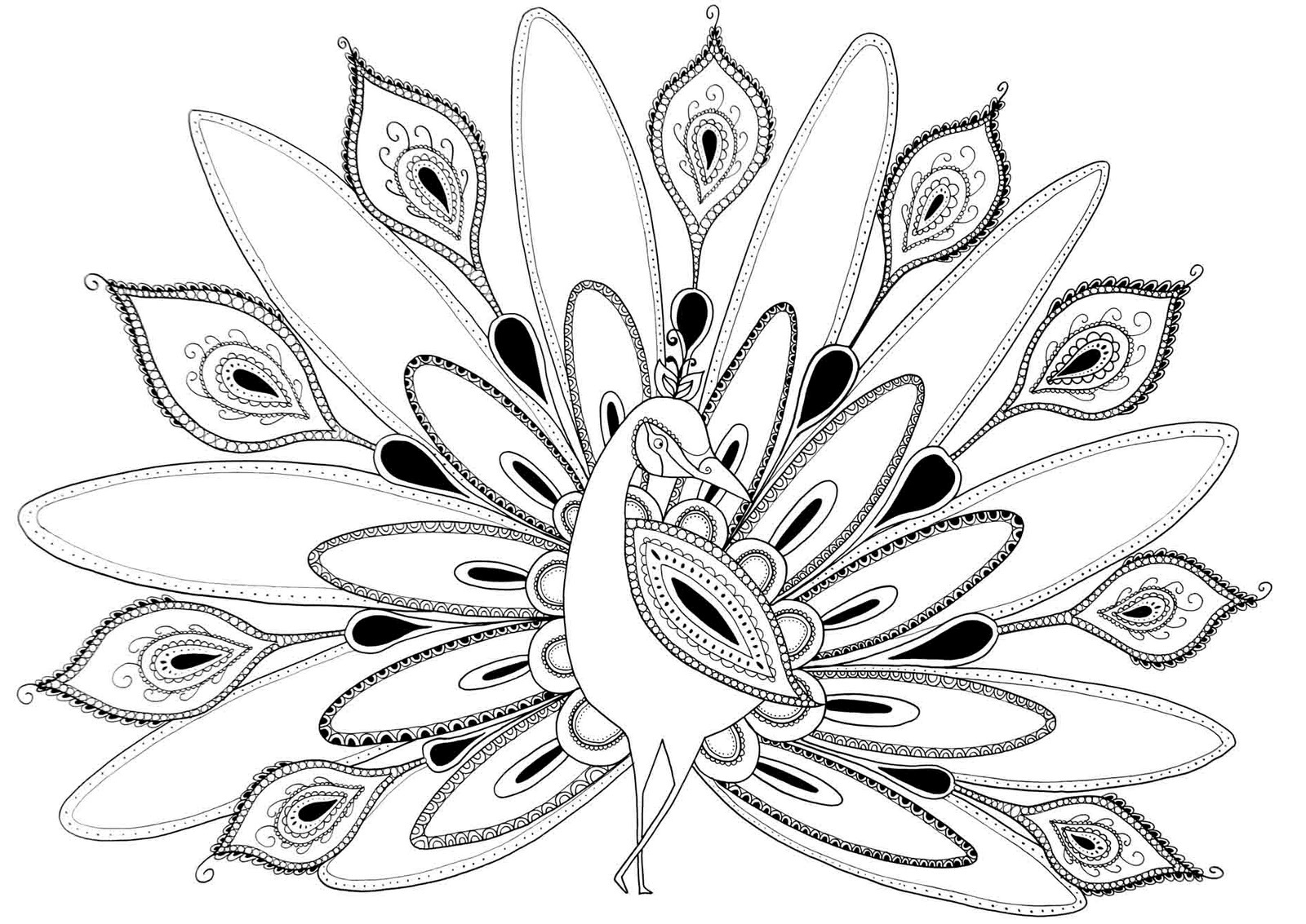 picture of peacock to color peacock beautiful peahen a female peacock coloring page picture to color of peacock