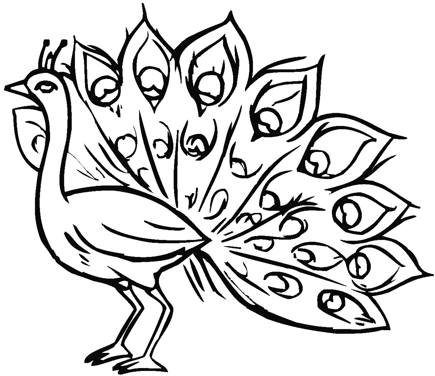 picture of peacock to color peacock coloring pages for kids to peacock picture of color