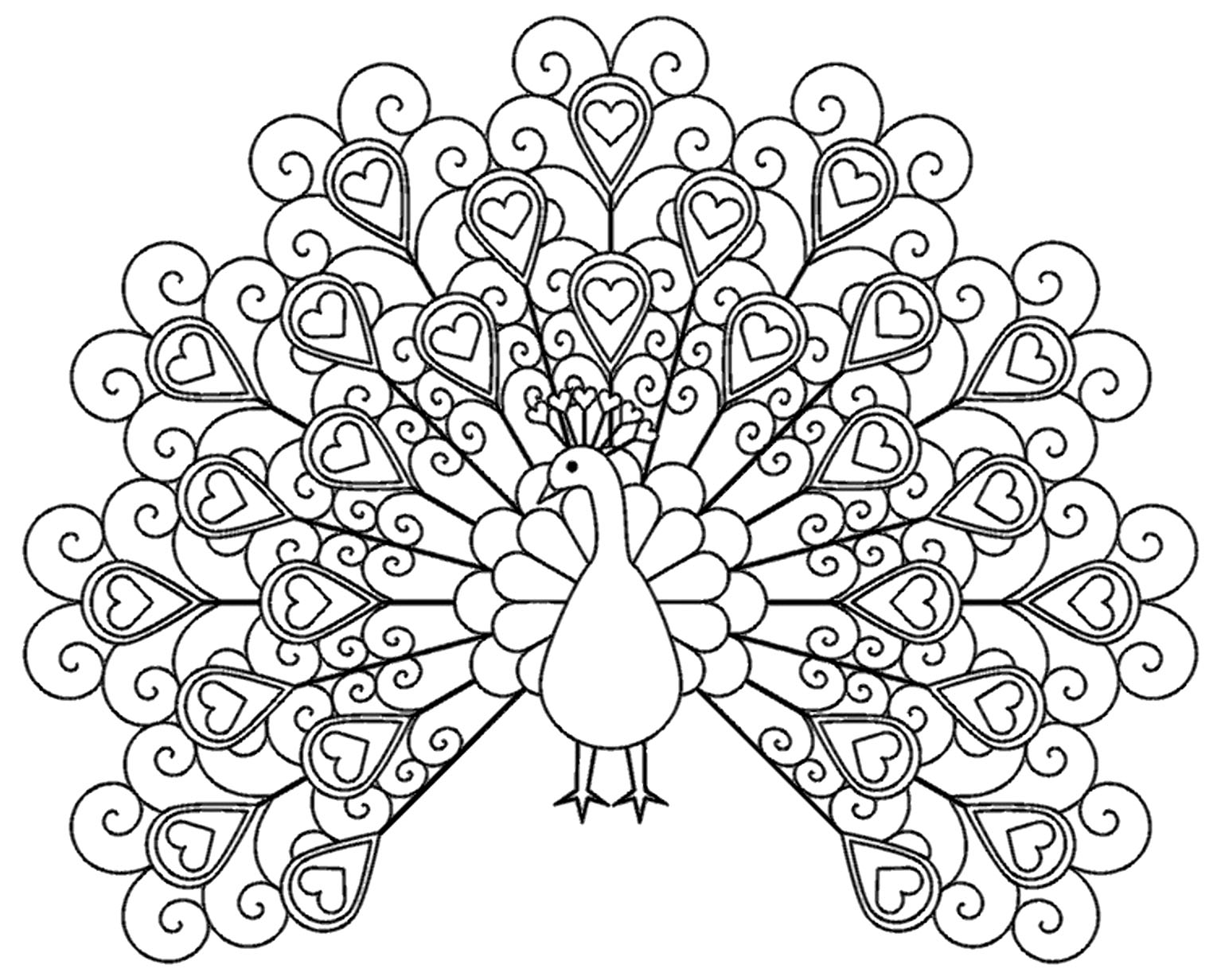 picture of peacock to color peacock coloring pages to picture color of peacock