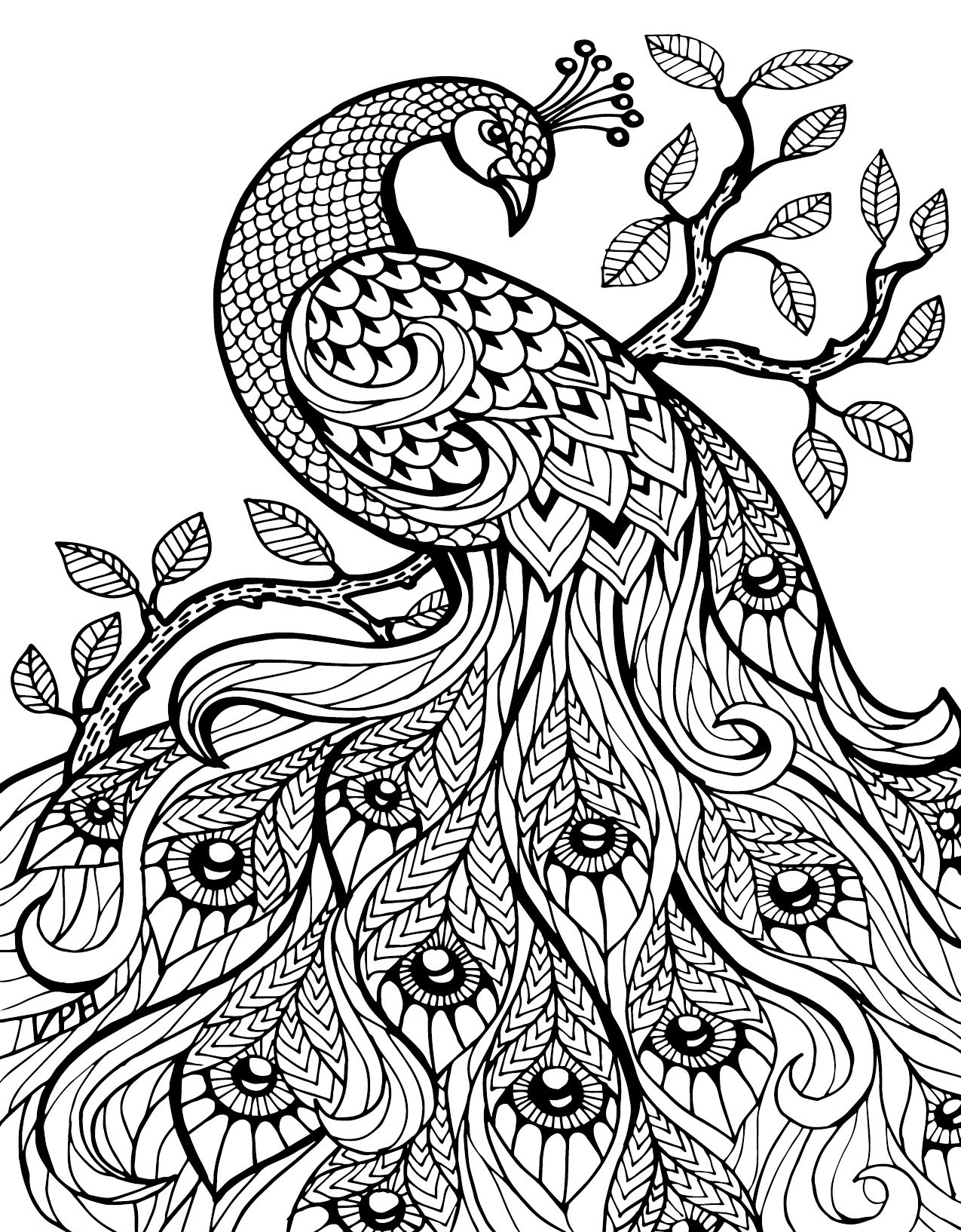 picture of peacock to color peacock pages coloring pages color peacock of picture to