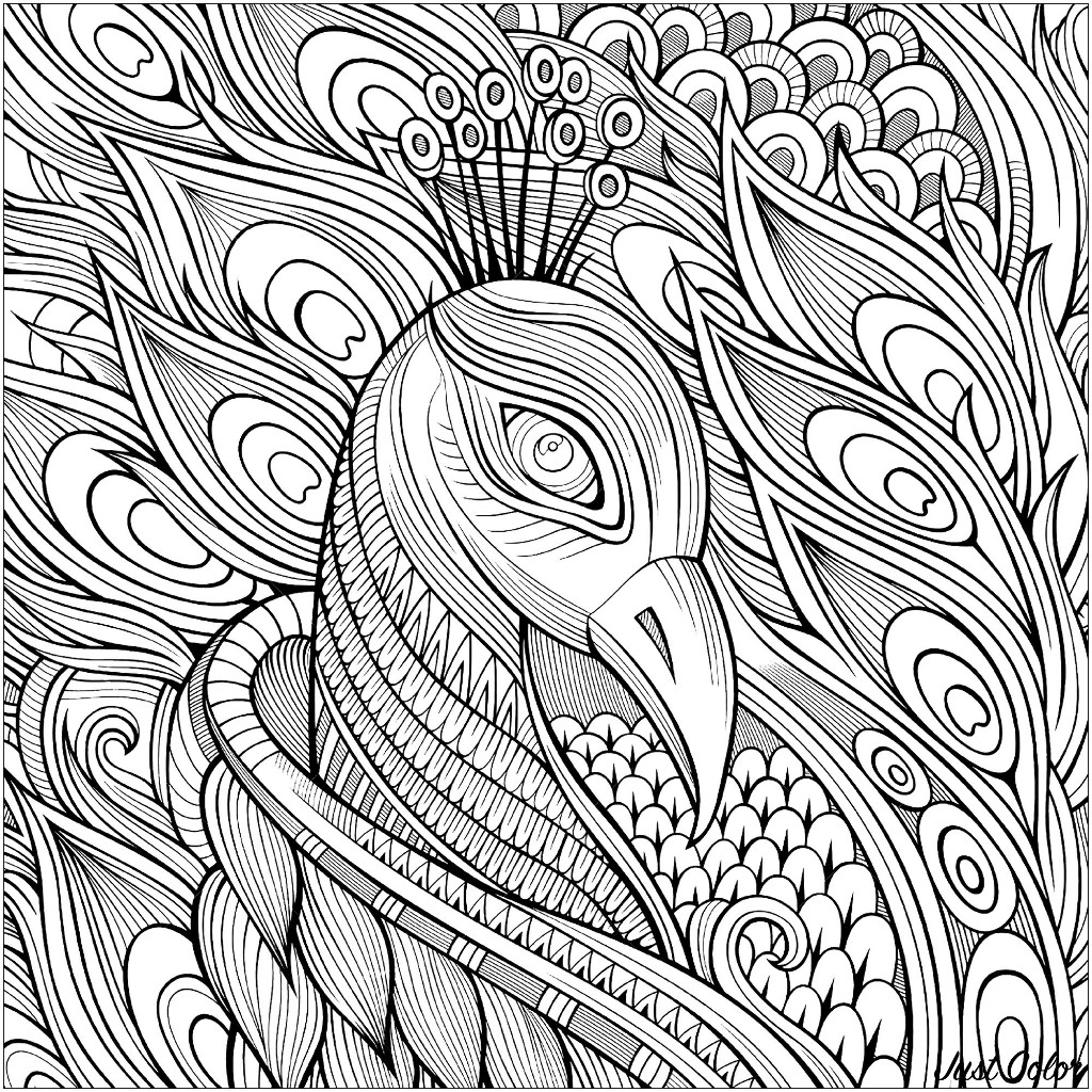 picture of peacock to color peacocks to color for children peacocks kids coloring pages of peacock color to picture