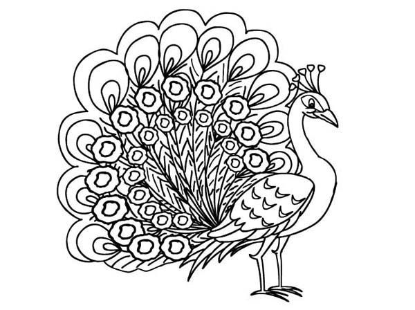picture of peacock to color peacocks to print for free peacocks kids coloring pages picture of to peacock color