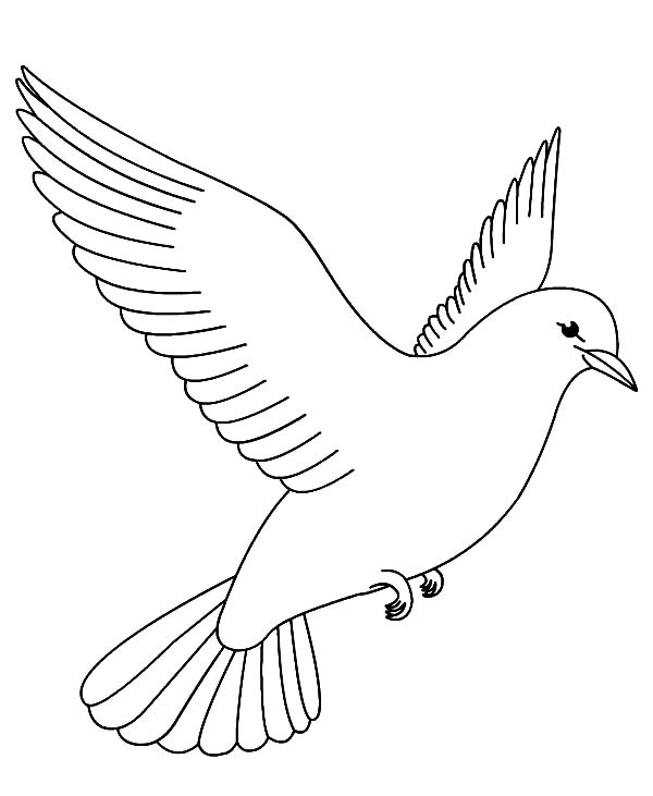 pictures of doves to color dove coloring page at getcoloringscom free printable to color doves of pictures