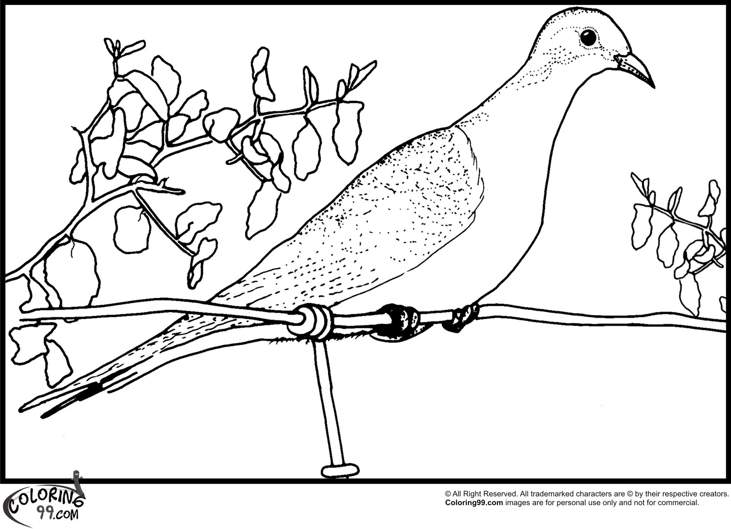 pictures of doves to color dove coloring pages team colors color to doves pictures of