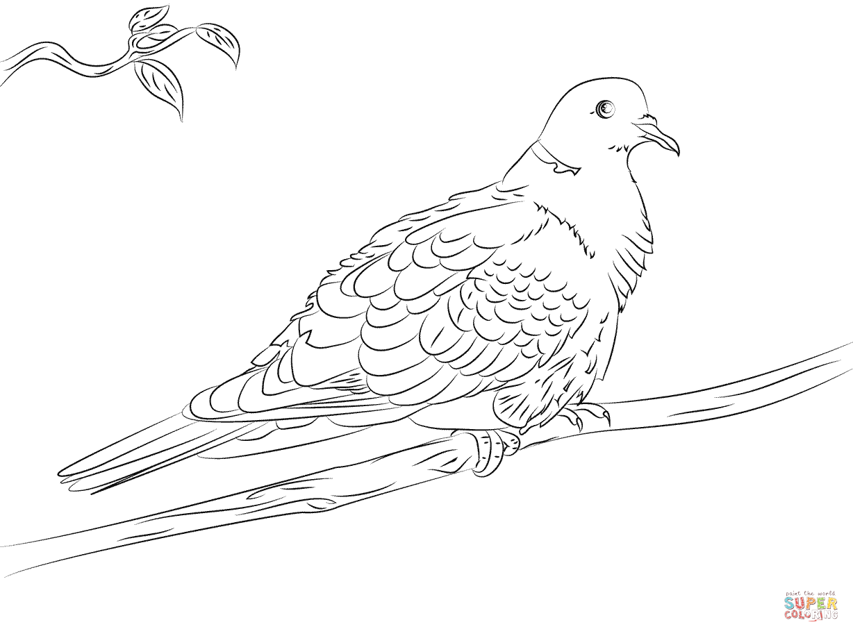 pictures of doves to color dove coloring pages team colors doves of to pictures color