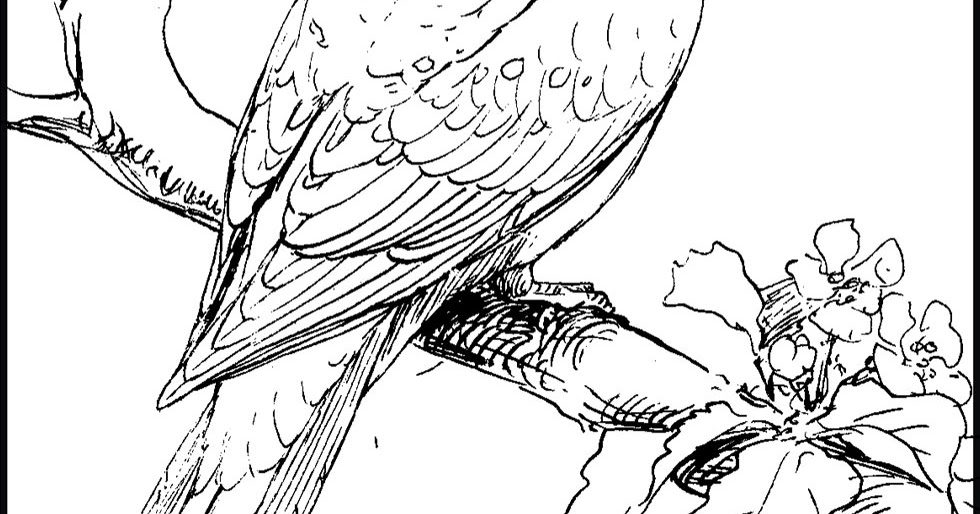 pictures of doves to color dove coloring pages team colors to doves pictures color of