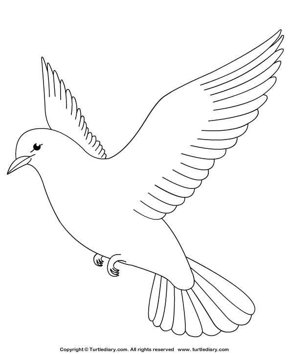 pictures of doves to color dove coloring sheet turtle diary of doves to color pictures