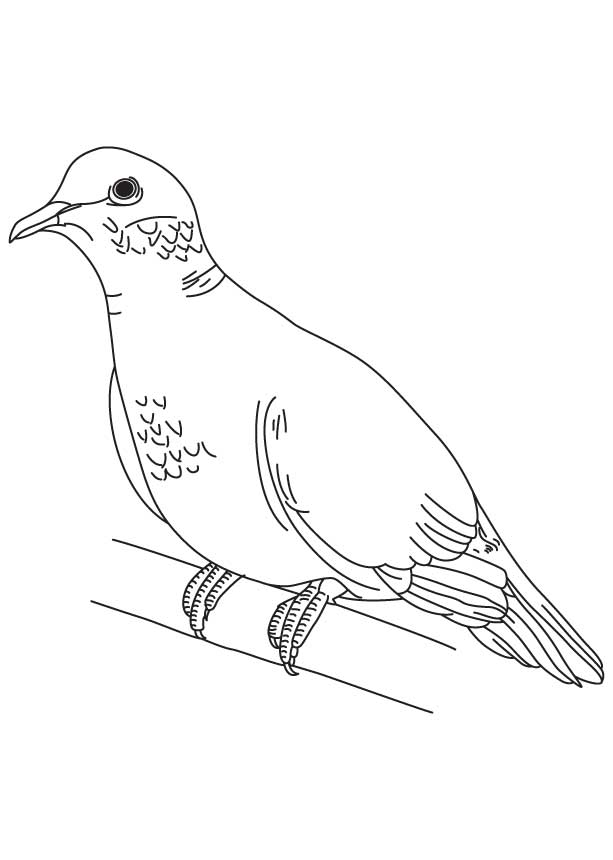 pictures of doves to color white dove coloring page coloring home doves of pictures color to