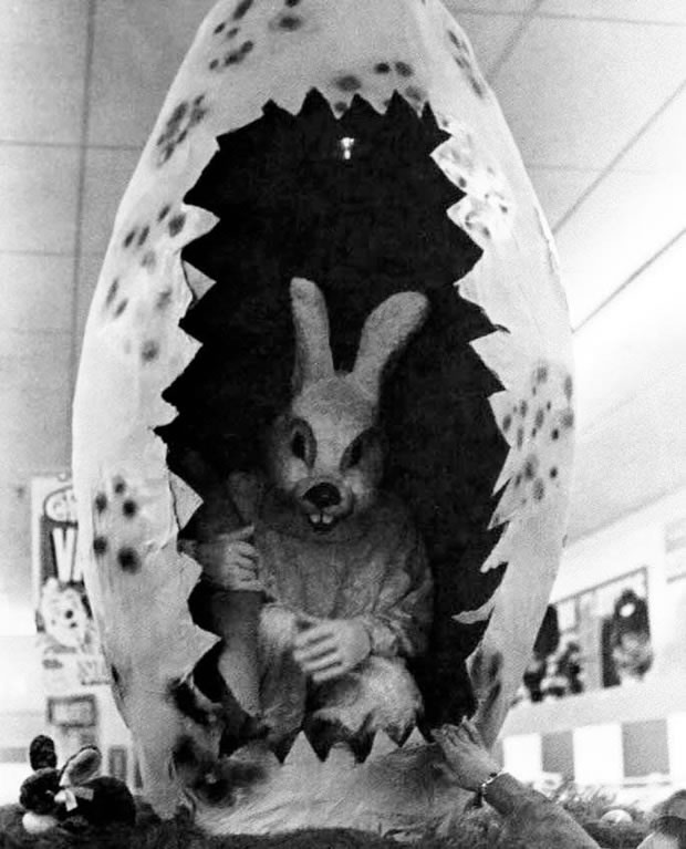 pictures of easter bunny professional easter bunnies reveal their secrets bunny pictures easter of