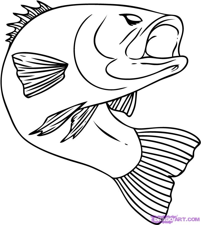 pictures of fish to color bass fish coloring pages clipart panda free clipart images pictures fish color of to
