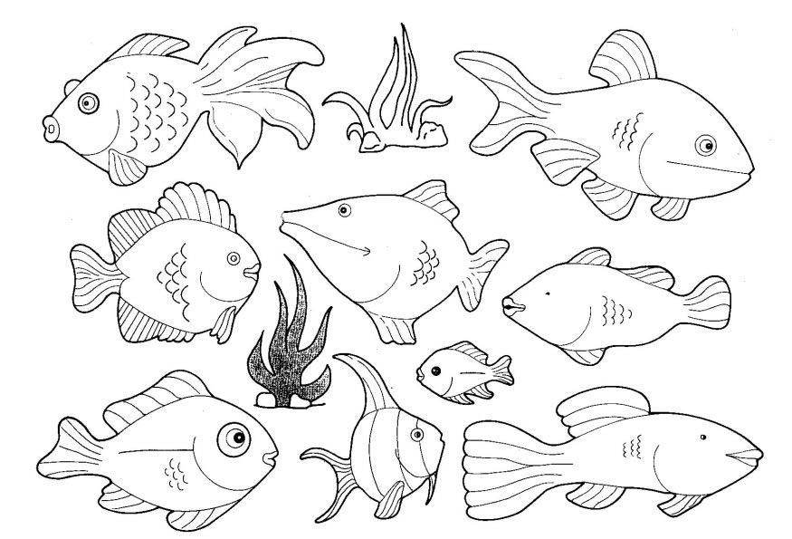 pictures of fish to color coloring sheet small fish coloring pages fish pictures color to of