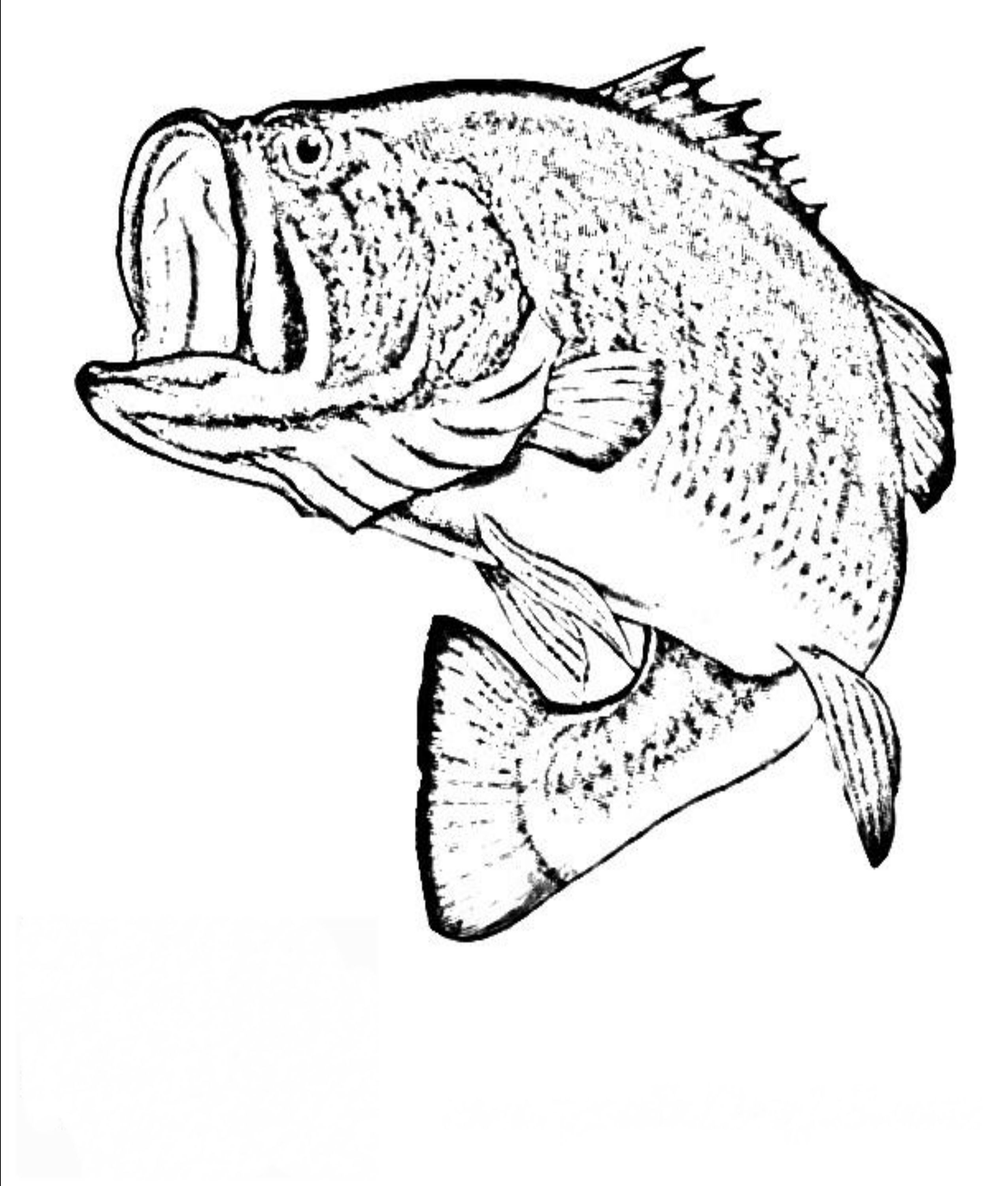 pictures of fish to color realistic fish coloring pages at getcoloringscom free color fish pictures to of